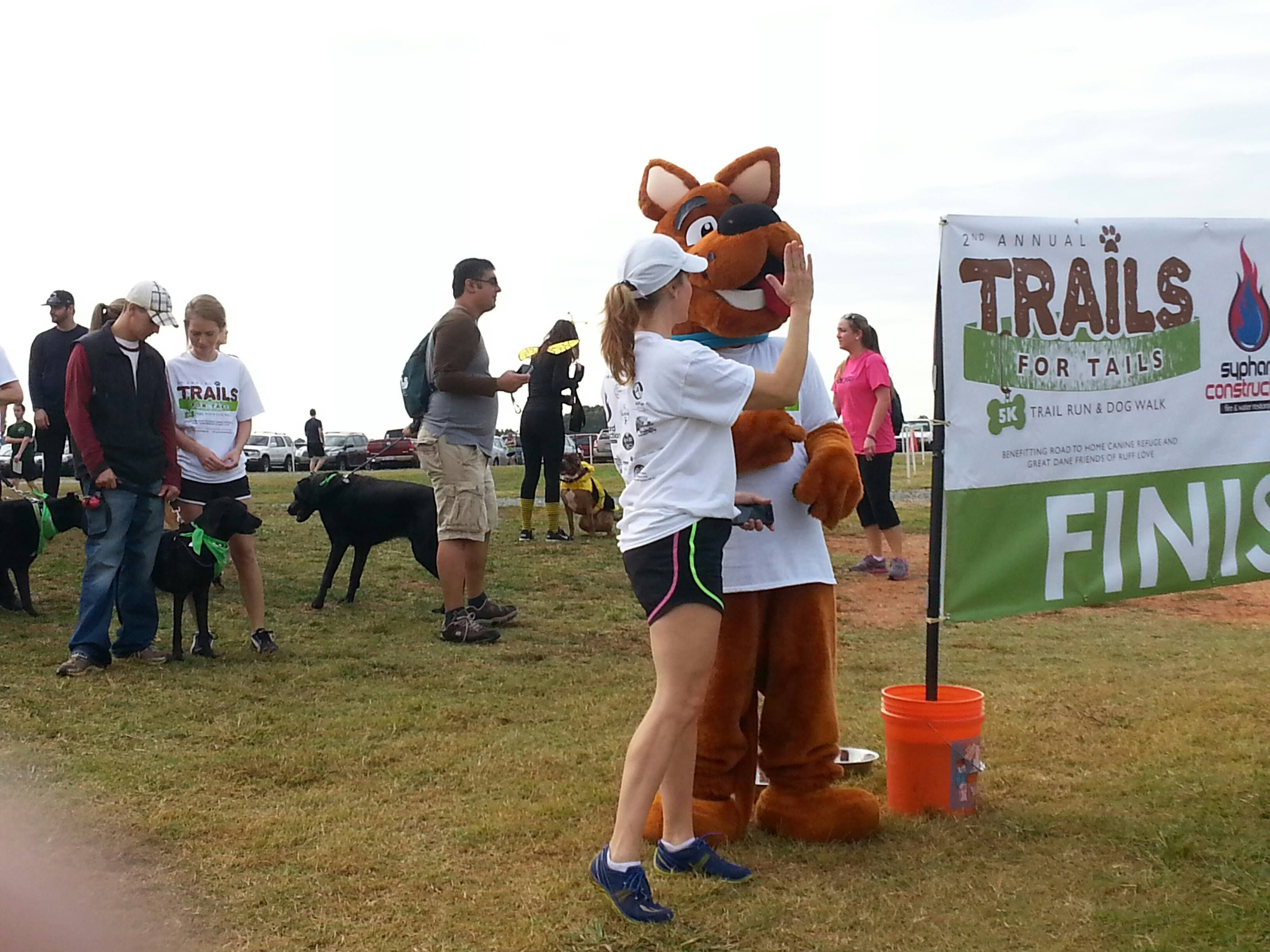 Scooby Getting Prepared For The Dog Walk At Trails For Tails Event