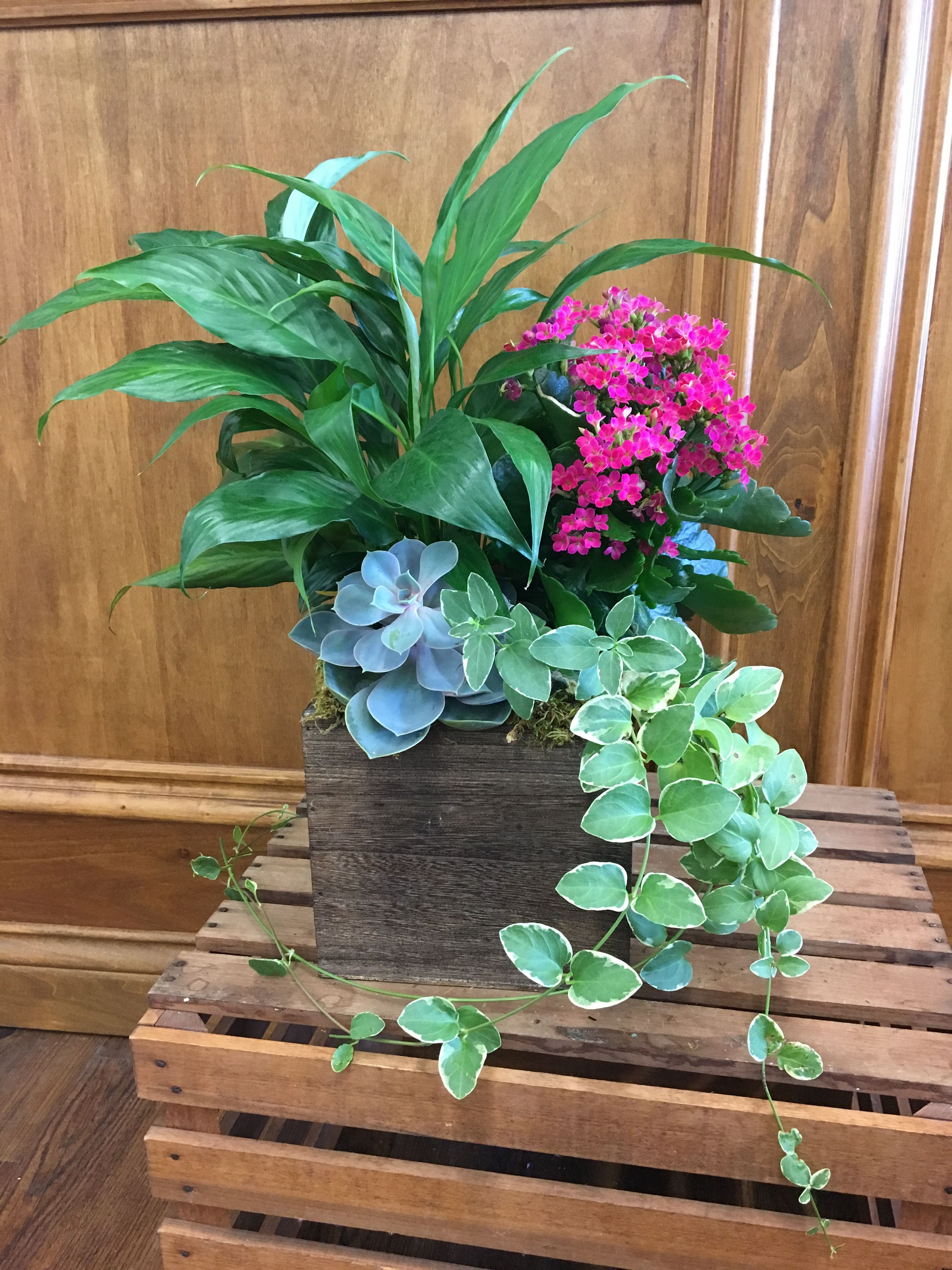 Planter box with succulents, blooming plant & a mix of green plants
