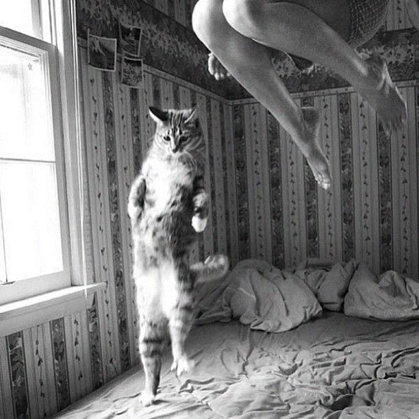Kittyness