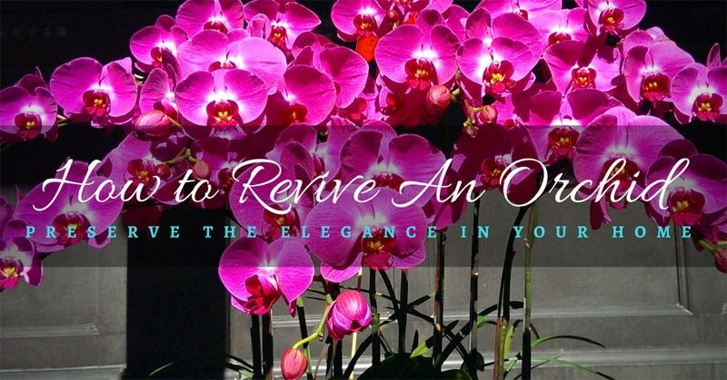 Howtoreviveanorchid orchids orchid roots beautiful