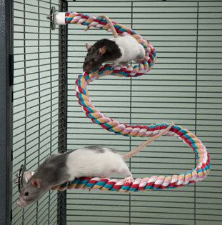 Zig Zag Rope Perch For Small Pets Toys For Rats Mice And