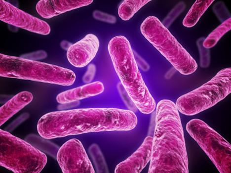 MRSA Bacteria Under a TENS Microscope #MRSA #MRSA ...