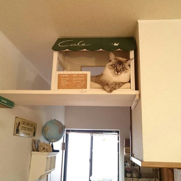 可愛くって仕方ない ペットと一緒に住む 一緒に暮らすためのインテリアコーデ集 Folk 猫の家具 ペット ペットと暮らすインテリア