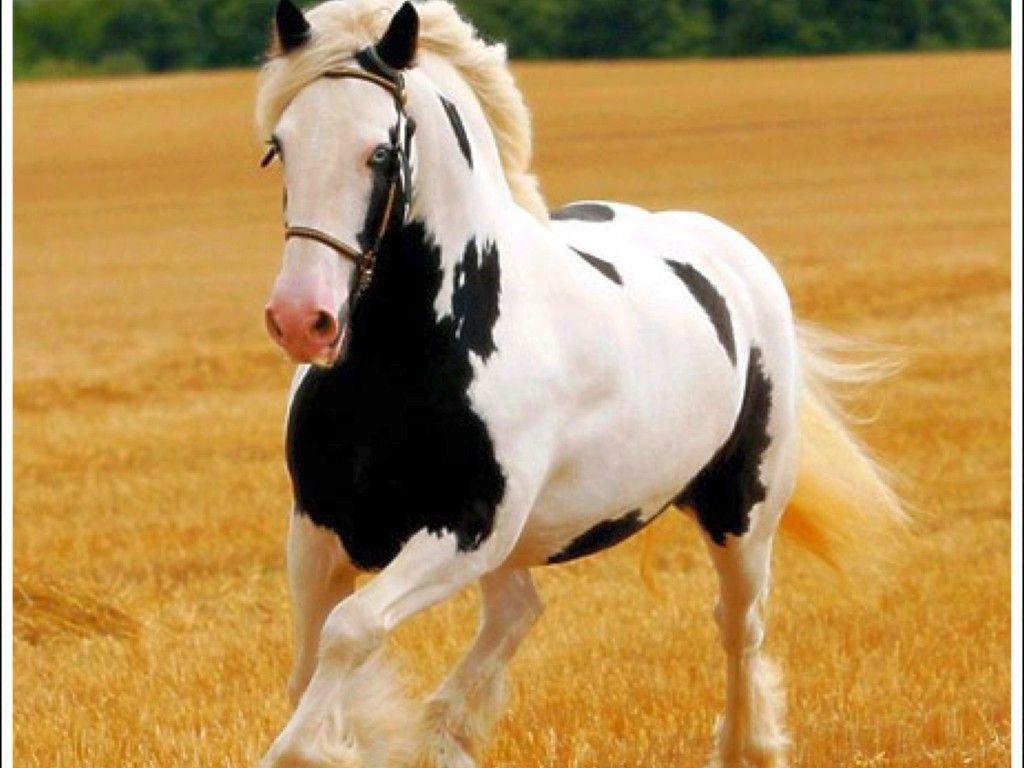 Free Desktop Backgrounds Screensavers Free Horse