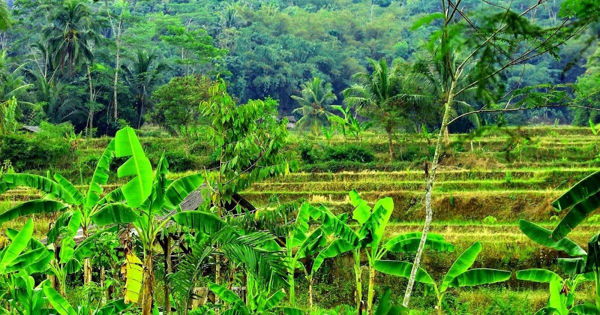 photo pemandangan alam wallpaper Pemandangan, Alam