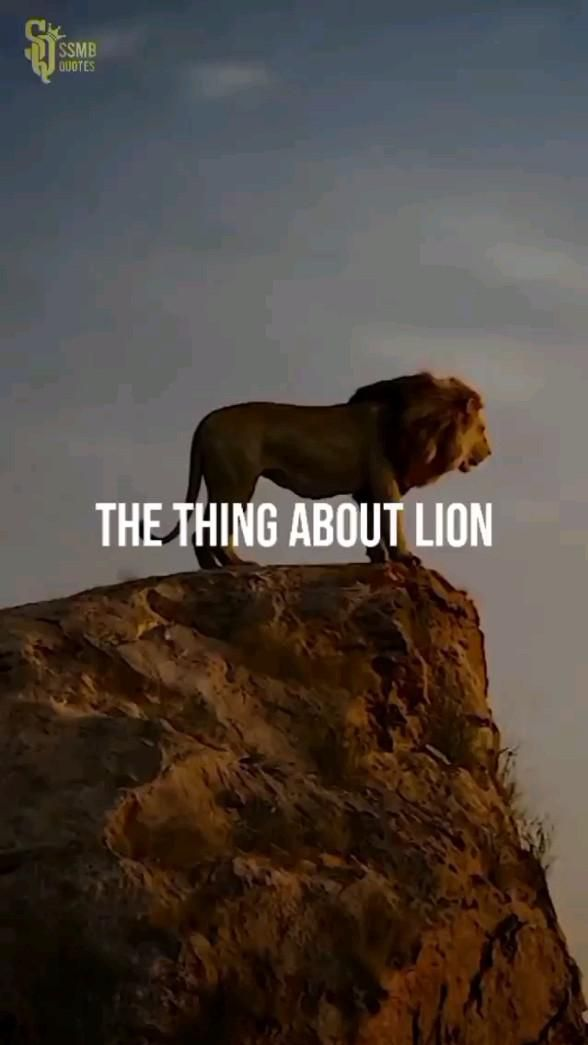"It's Mentality & Attitude.🦁( Be like a ""Lion"