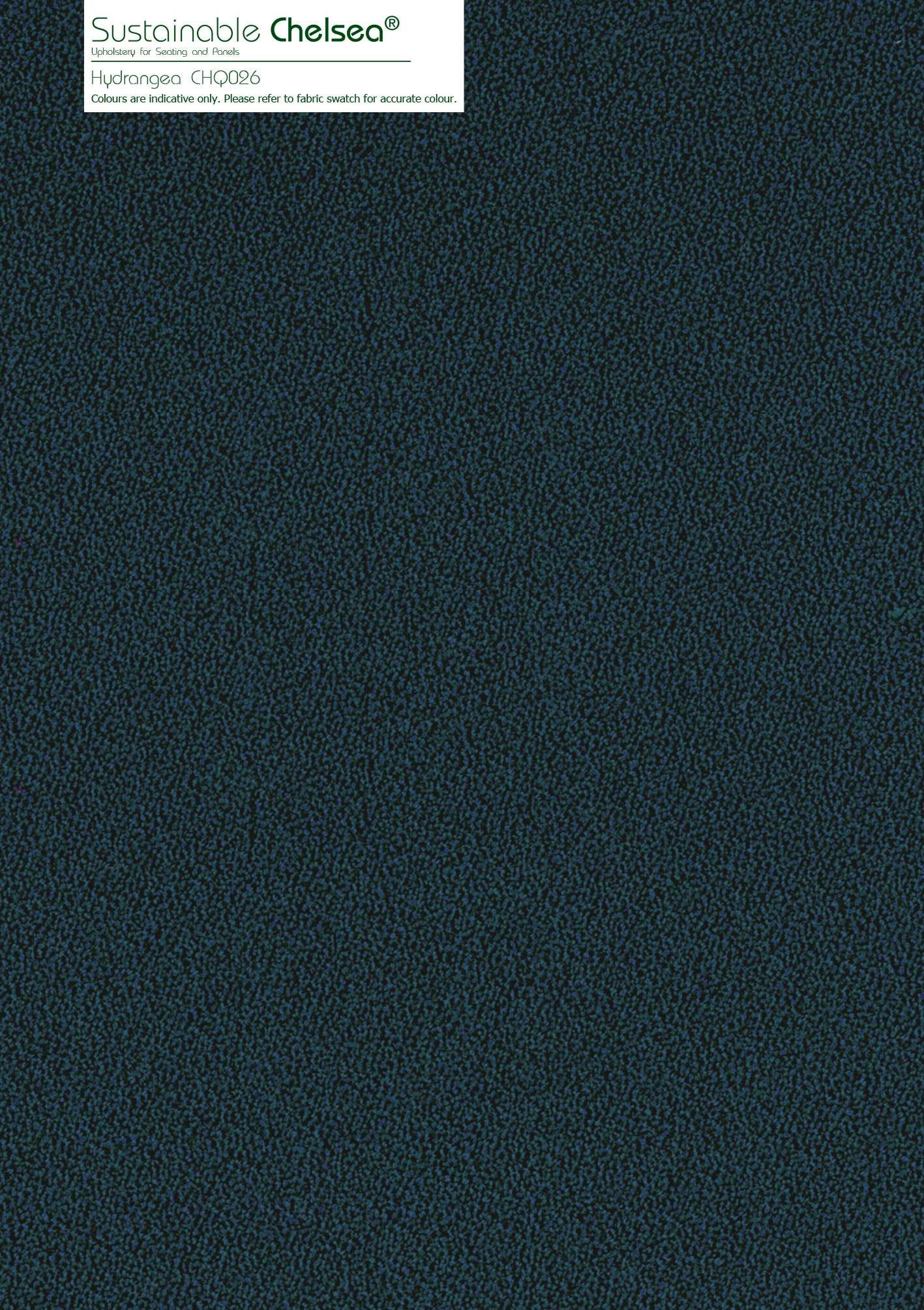 Hydrangea CHQ026