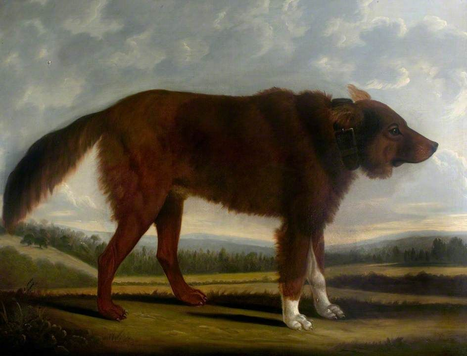 Lord Byron's Dog 'Lyon' (The Wolf Dog), Clifton Tomson