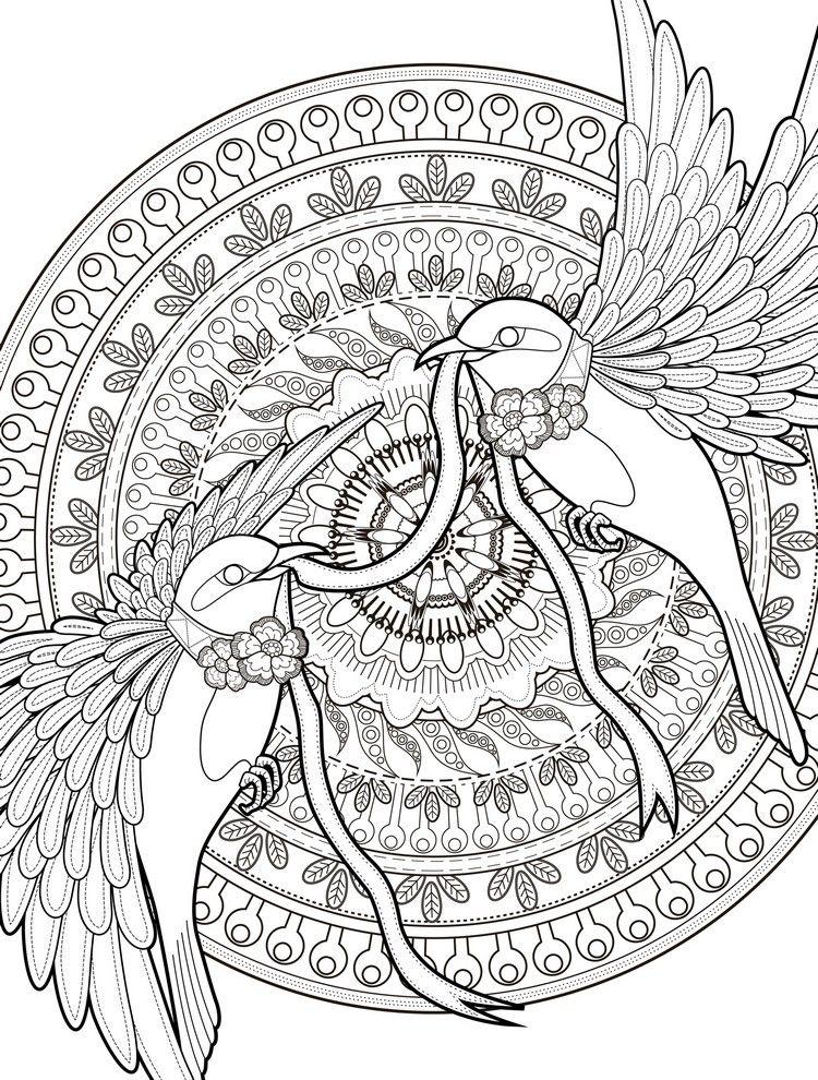 ausmalbilder erwachsene ausdrucken komplizierte vorlage vögel