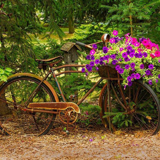 Old Bicycle Planter Grandson Got Me 2 Old Bikes For The Garden! Heu0027s A Great