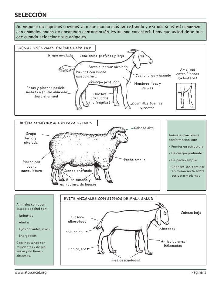 SELECCIÓNSu negocio de caprinos u ovinos va a ser mucho más ...