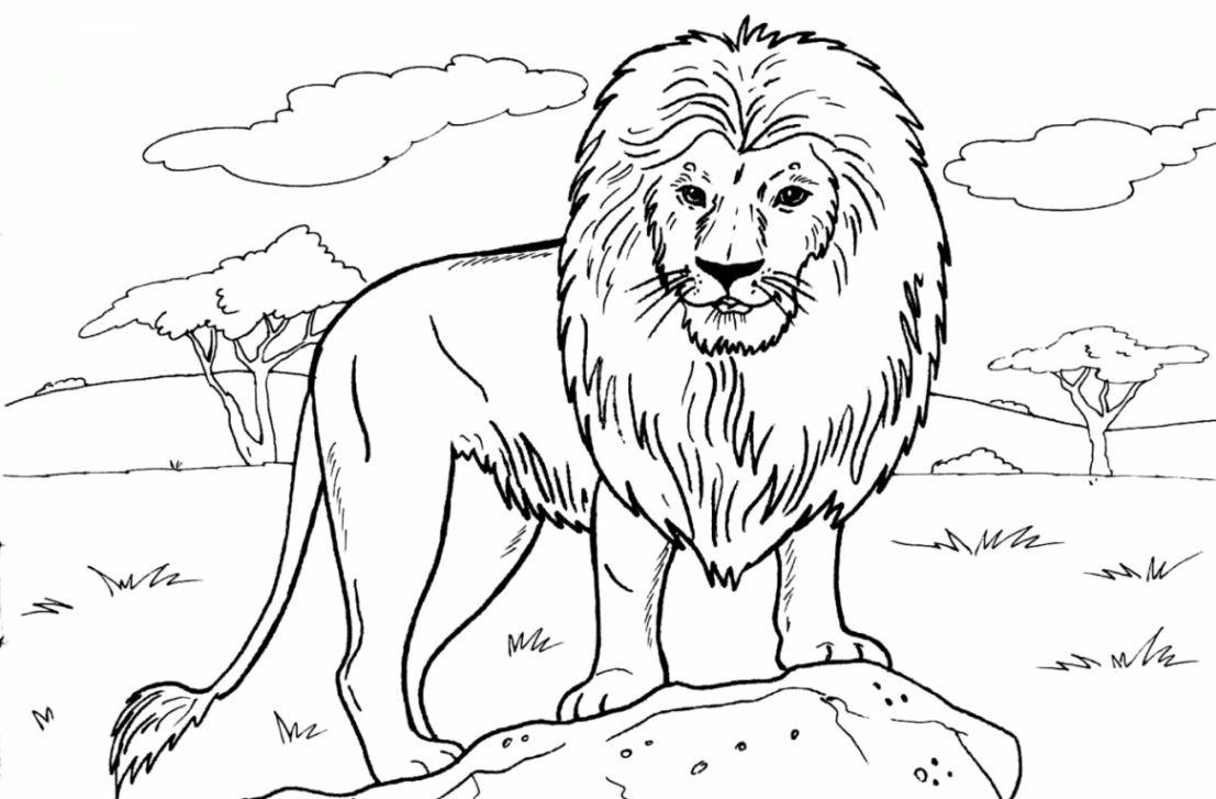 Loewen Ausmalbilder Ausmalbilder Loewen Ausmalbild Lowe Tiervorlagen Tiere Zeichnen