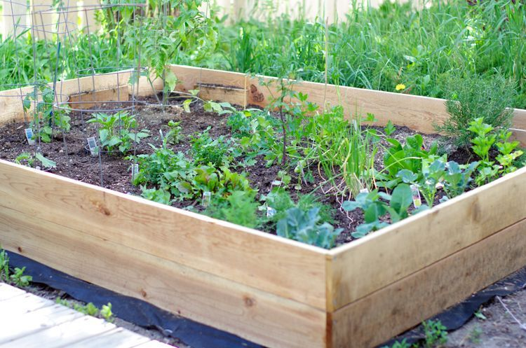 Simple Raised Vegetable Garden Box    Raised garden beds are one of the easiest ways to start a vegetable garden. This 7ft x 5ft garden box is made from cedar which is naturally rot resistant and doesn't require staining, sealing or painting.
