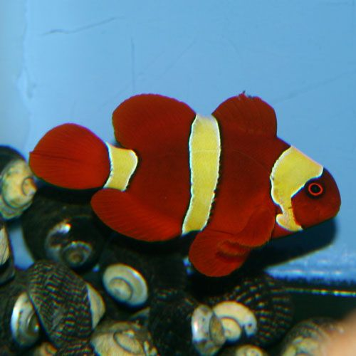 Pin En Saltwater Fish