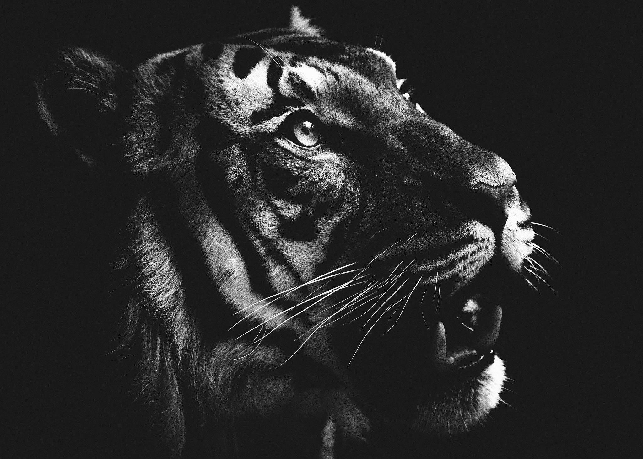 Faraway Look Be bold, Animals