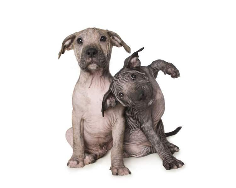 Oak Ridge Nj Pomeranian Dachshund Mix Meet Sigmund A Dog For