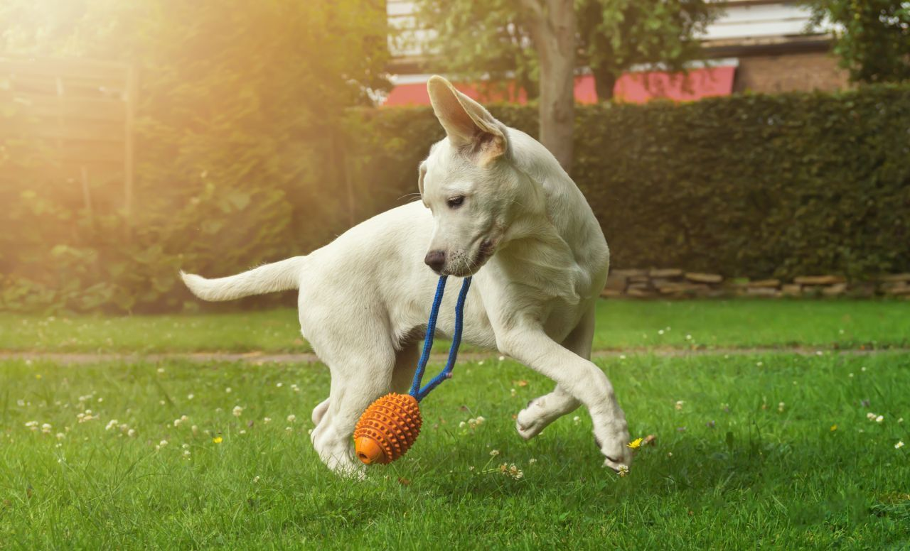Big or small, young or old, dogs need to exercise daily