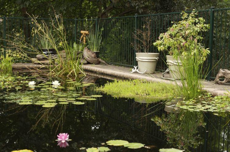 piscine naturelle, plantes aquatiques, nymphéas et plantes en pots