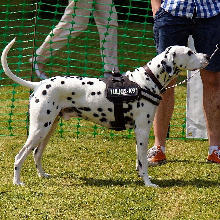Julius K9 Dog Harness Many Sizes And Colours Free P P Dog