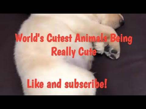 Cute Animal Moments Caught On Video Compilation Adorable Puppies, Pets And Baby Pigs!