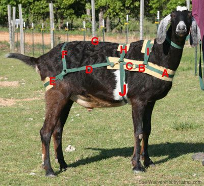 Make a Goat Harness for Pulling - Uses this guide to sew a ...