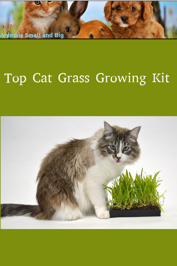 Top Cat Grass Growing Kit in 2020 Cat grass, Animals, Cats