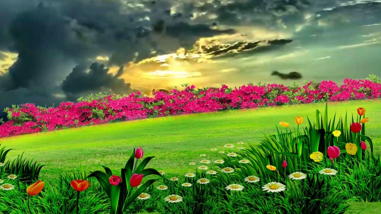 Beautiful Natural Flower Garden, Dream Background Video