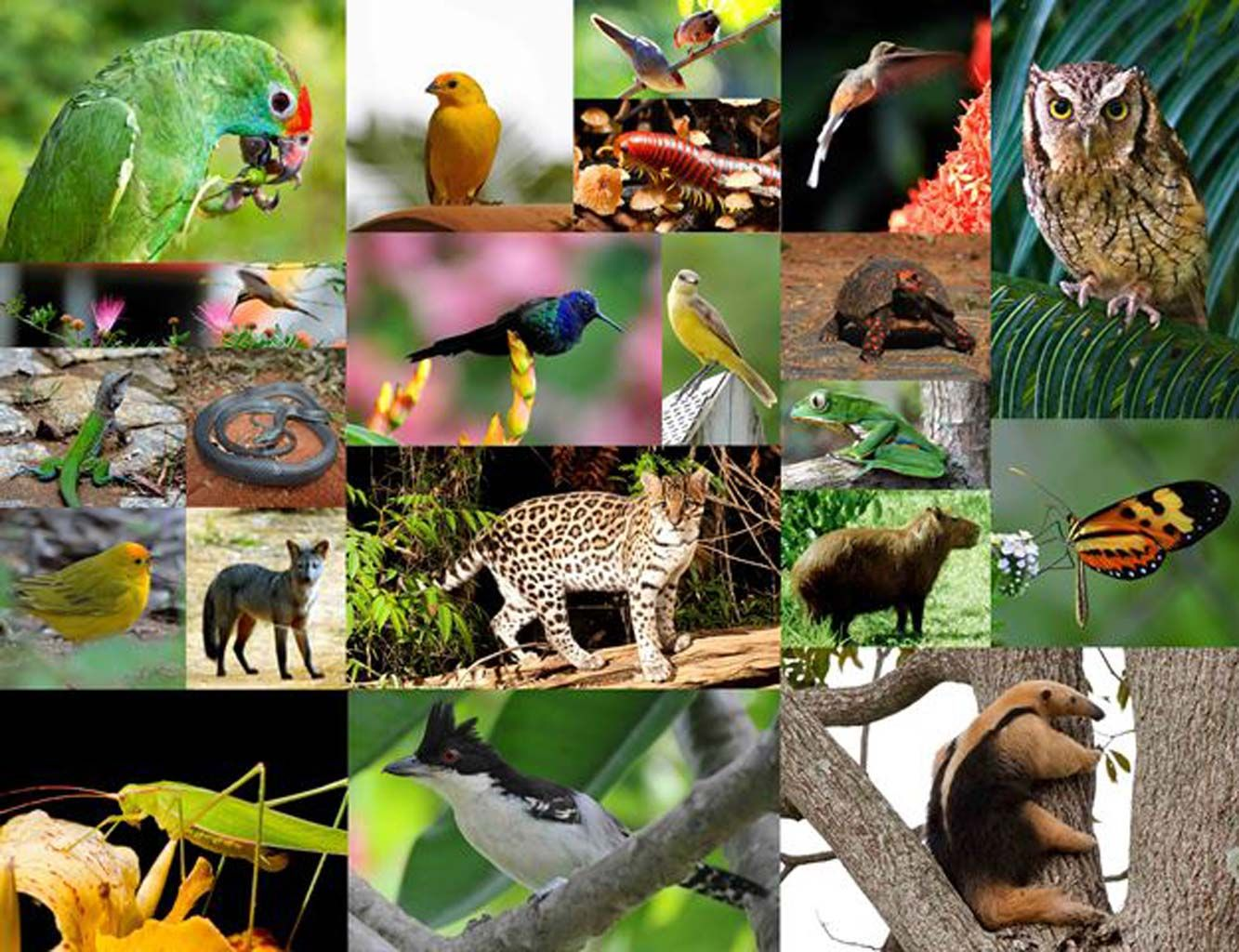 Brazilian Couple Created 1,502-Acre Forest In 20 Years, Which Houses 500+  Endangered Plant & Animal Species | Animal species, Trees to plant, Replant
