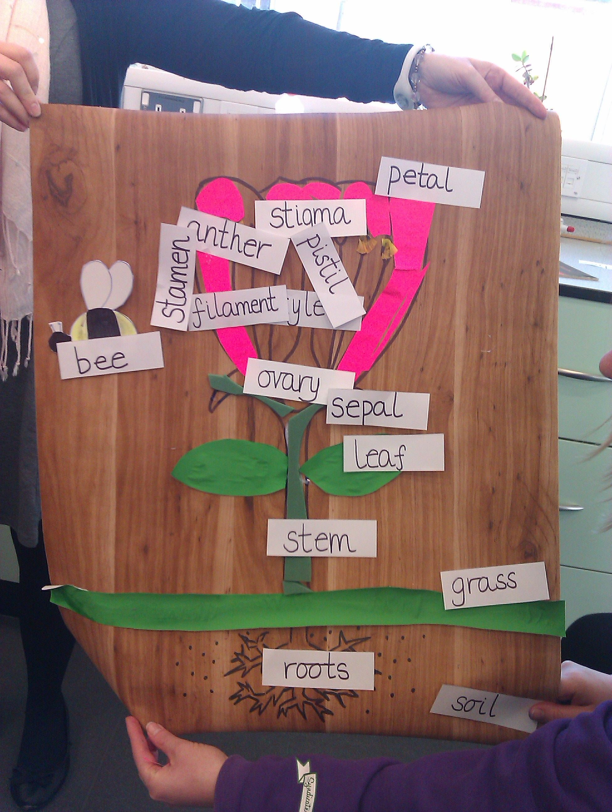 My group's labelled diagram of a flower created during our ...