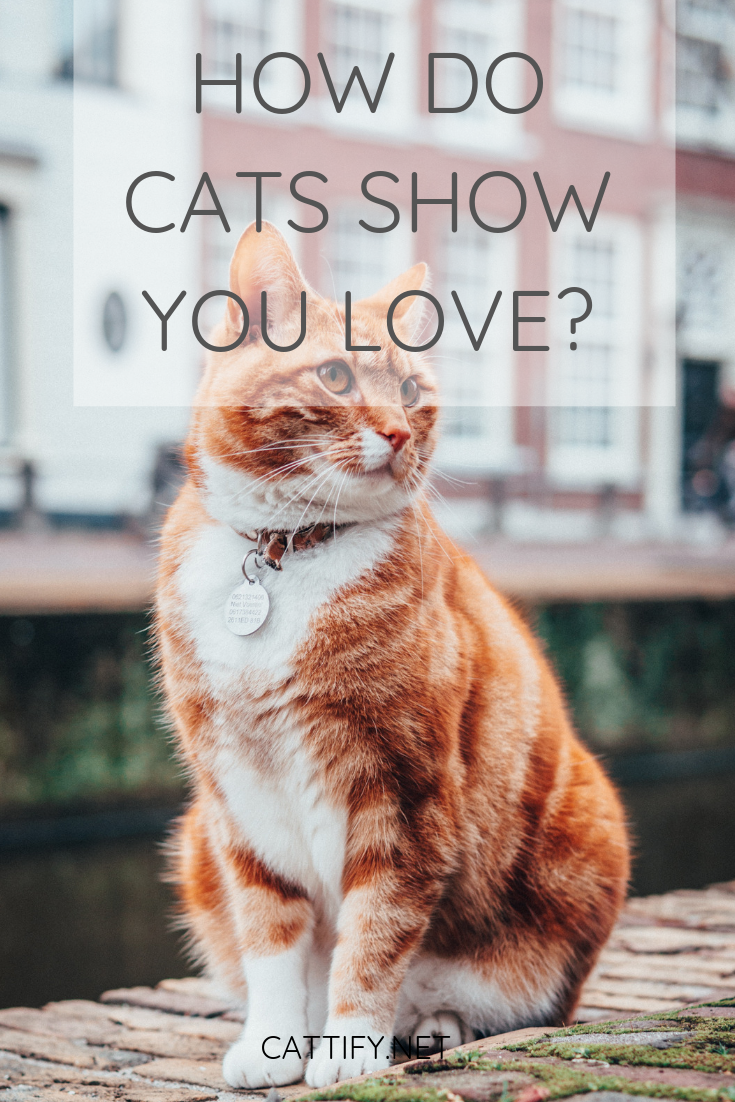 How Do Cats Show You Love Cattify Cats Cat Love Cat Advice