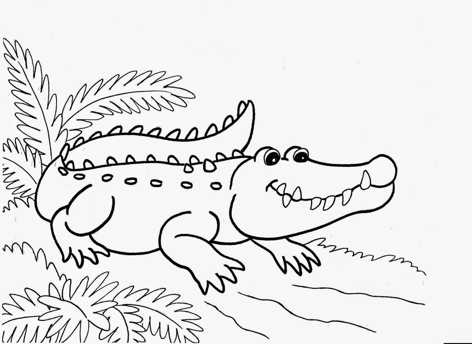 Crocodiles Colour Drawing HD Wallpaper | PROYECTO LOS ANFIBIOS Y LOS ...