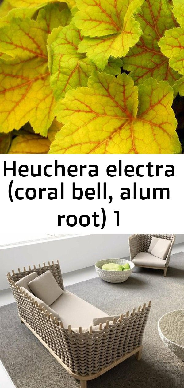 Heuchera electra coral bell alum root 1 Armchairs and sofas for outdoor use relax in your garden Make a drip feeder using an old soda bottle