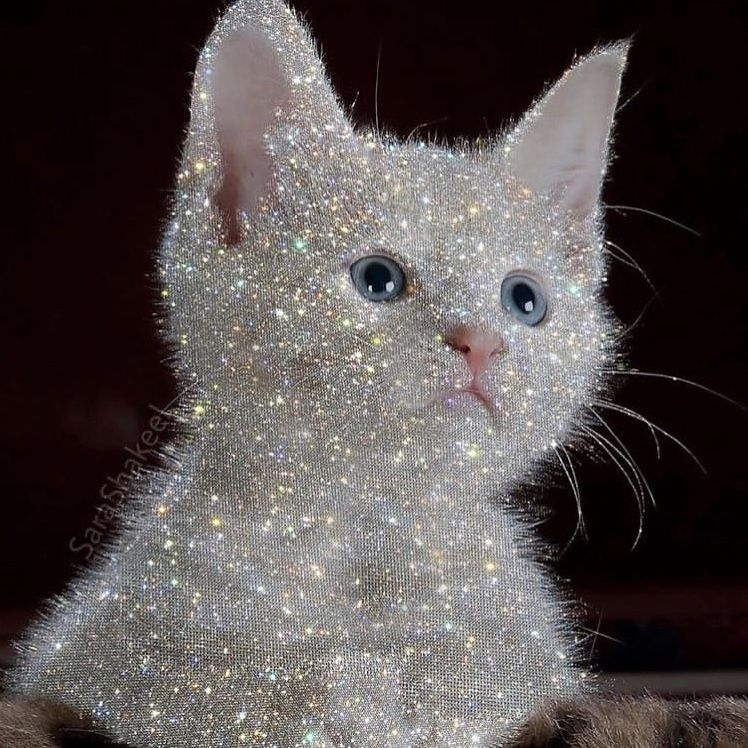 свой блестяшки картинки кошки еле еле научилась