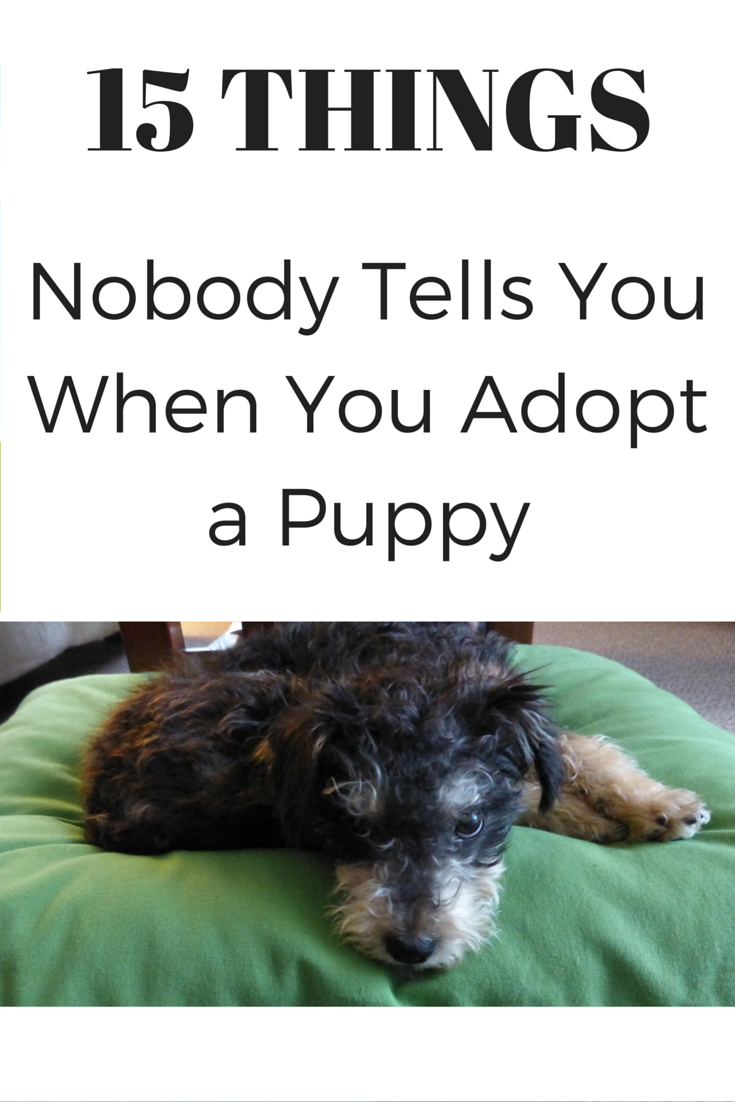 what age can you adopt a puppy