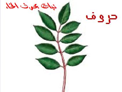 نبات بحرف الخاء حروف اللغة العربية Plant Leaves Plants