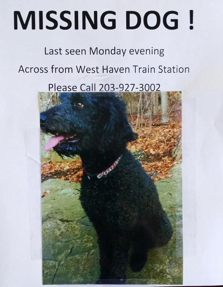 Jennifer Rubino Ct Lost Pets Yesterday Near Bridgeport Ct Our