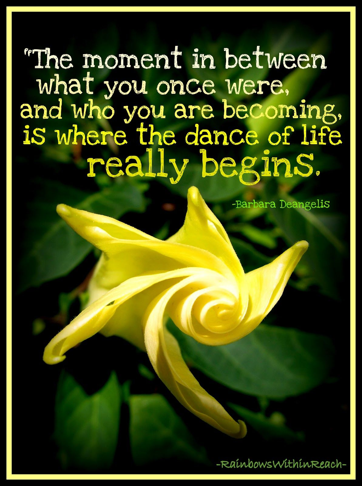 Who are you becoming dance dancing flower and wisdom the dance of life quote with photo of flower in bloom from rainbowswithinreach izmirmasajfo