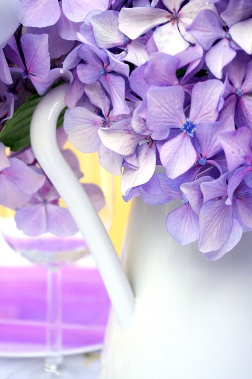 hydrogen flower purple i like the flowers but they 39 re hydrangea and not hydrogen. Black Bedroom Furniture Sets. Home Design Ideas