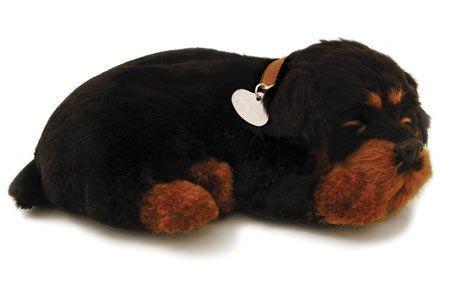 Perfect Petzzz Rottweiler Rottweiler Rottweiler Puppies Pet