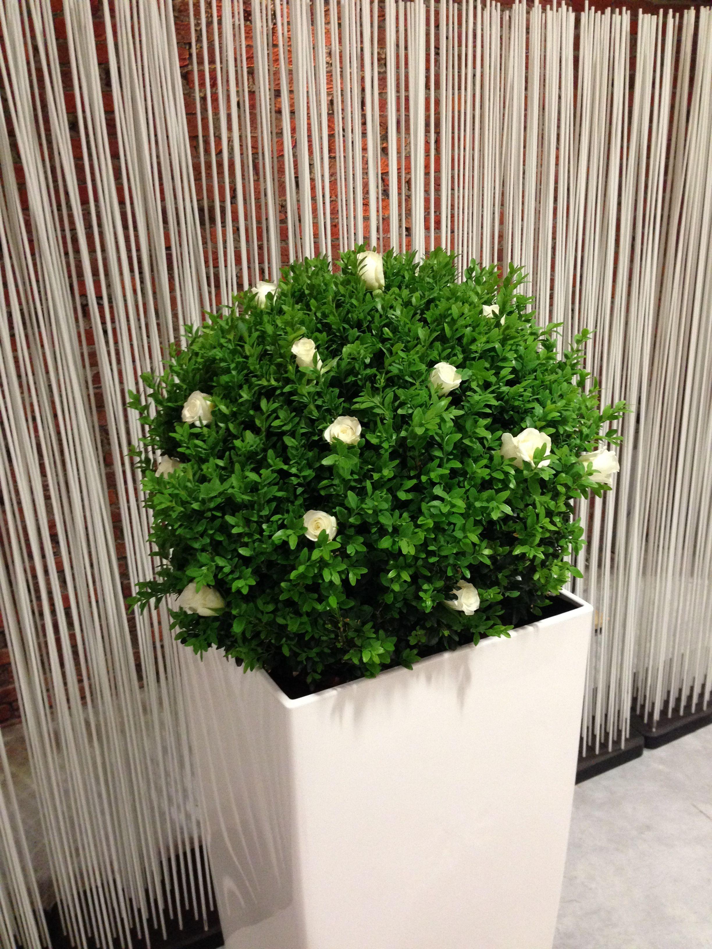Zaaldecoratie Tafeldecoratie Huwelijk Trouw Huwelijk Trouwen Planten