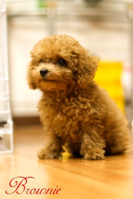 OMG..Adorable...This baby looks like my doggie Bella.