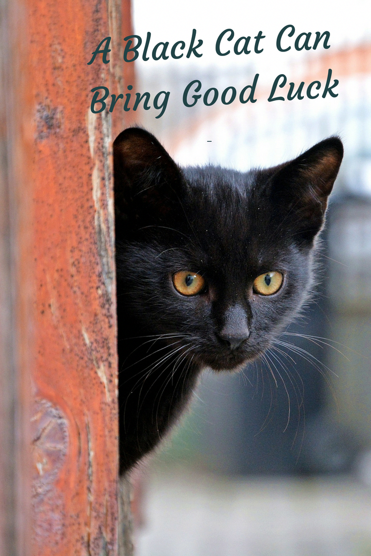 If you want some good luck, why not adopt a black cat or