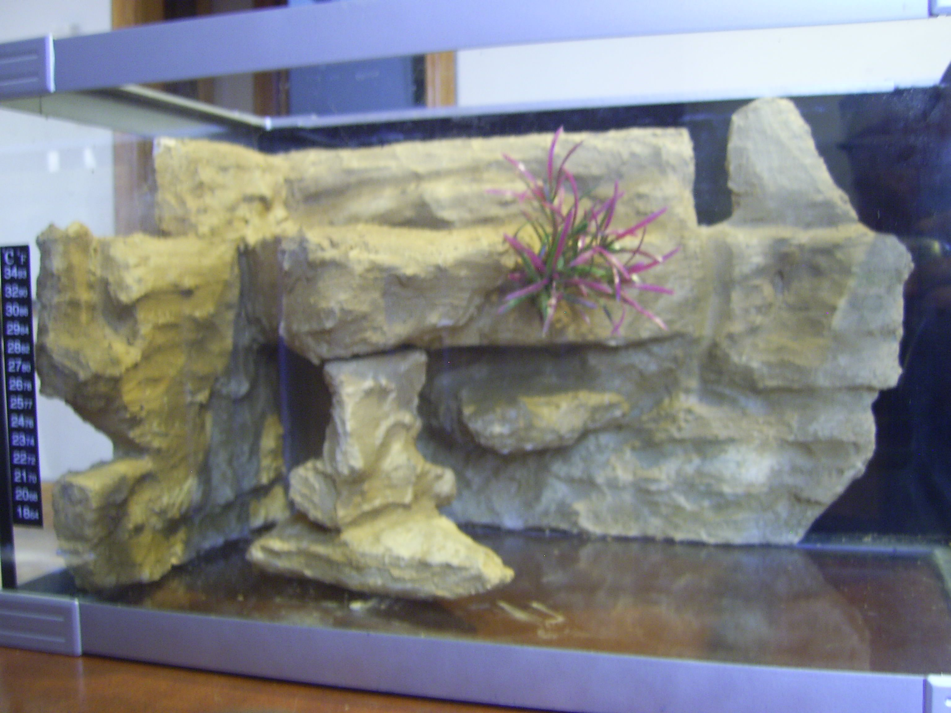 Diy Aquarium Background Aquarium Geophagus In The 125g