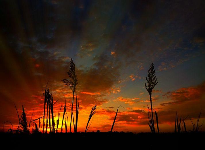 Oklahoma sunrise. Nothing quite like it.