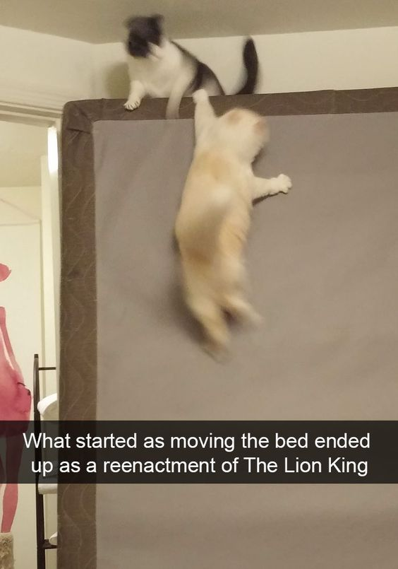 What started as moving the bed ended up as a reenactment of The Lion King