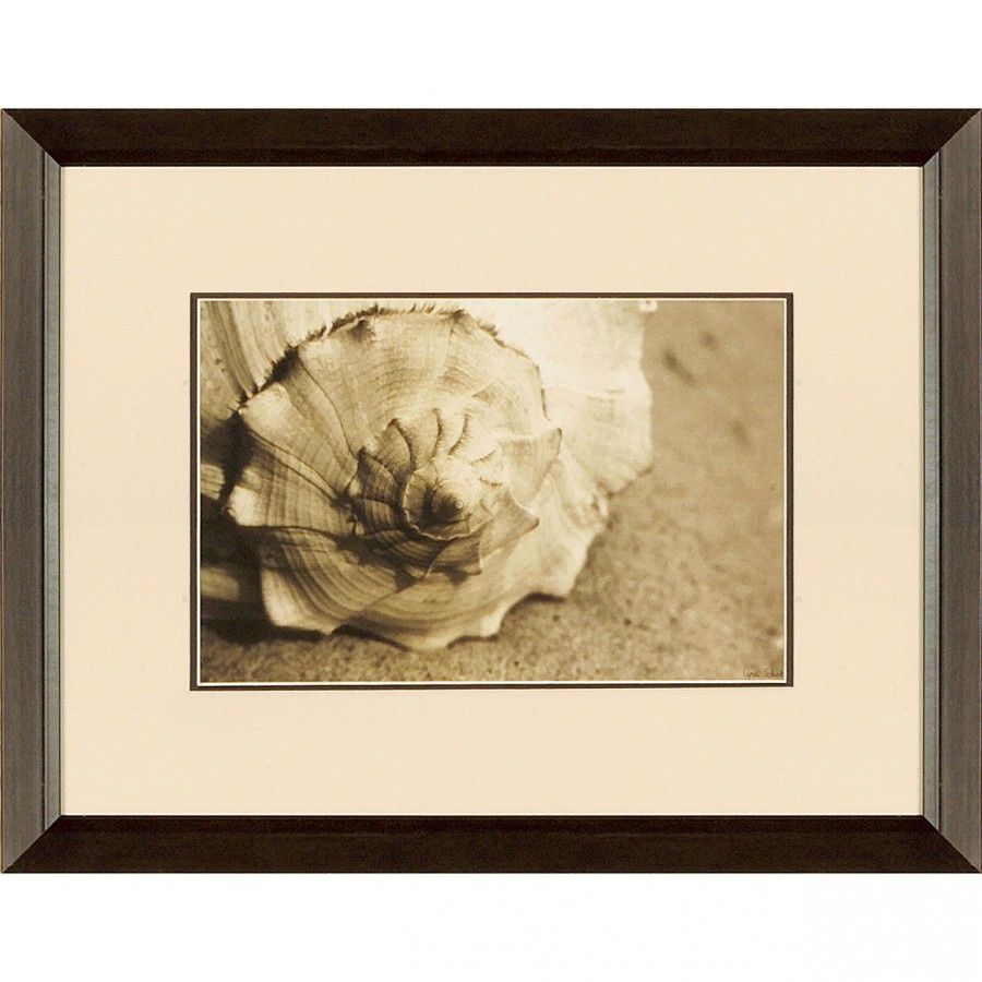 New Century Picture Conch by Schick Wall Art - 20.5\