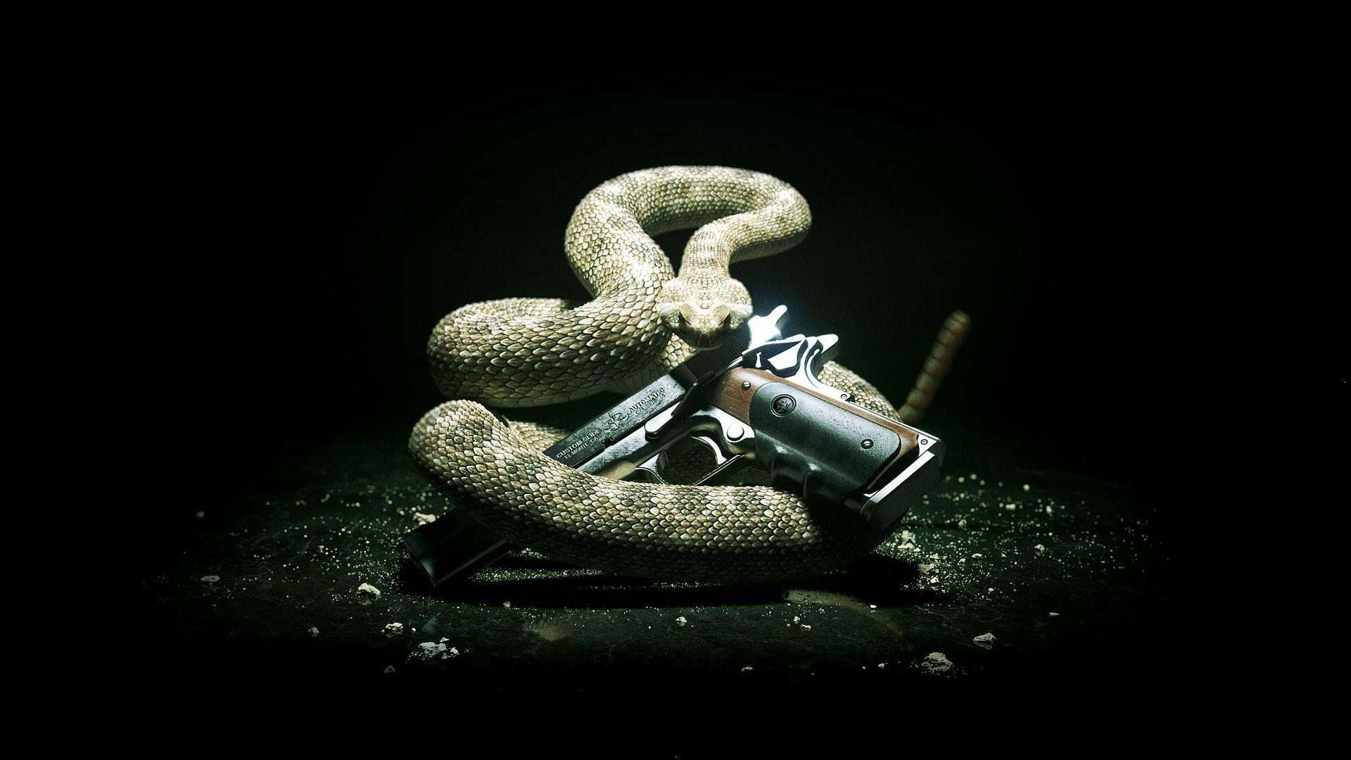 Don T Tread On Me Don T Tread On Me Wallpaper Snake Wallpaper Guns Wallpaper Snake Images
