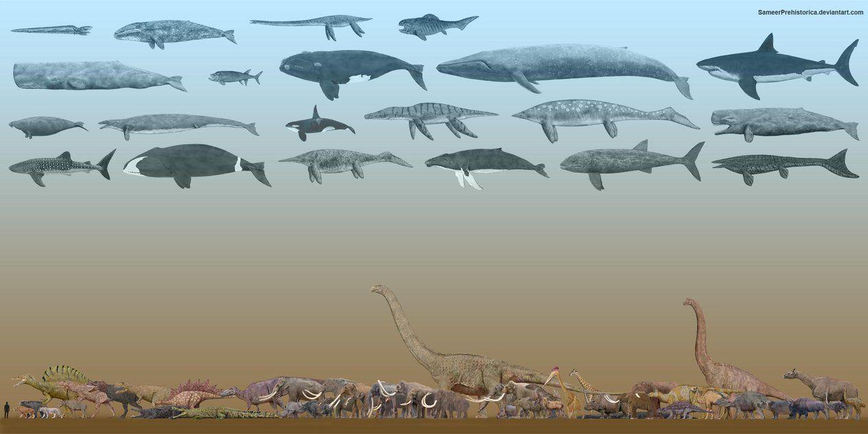 Deinosuchus Vs Spinosaurus   www.pixshark.com - Images Galleries With A Bite!