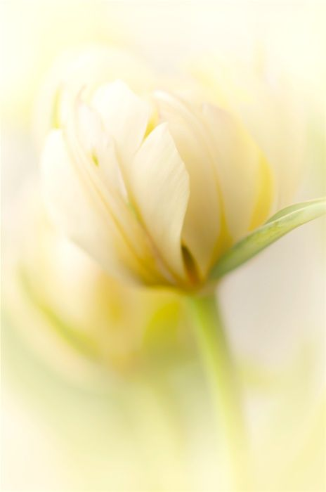 Pale Yellow Flower More Pastel Inspiration Here Http Mylusciouslife