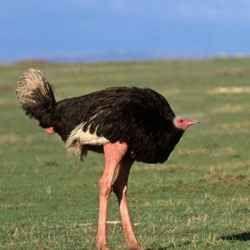 Necks Meme animals Without Necks Sad And Useless Humor Animals Without Necks Random Animals Ostriches Birds